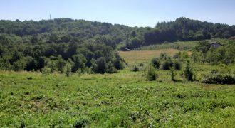 Zemljište 10,000 m2 i šume 6,800 m2 – Motike